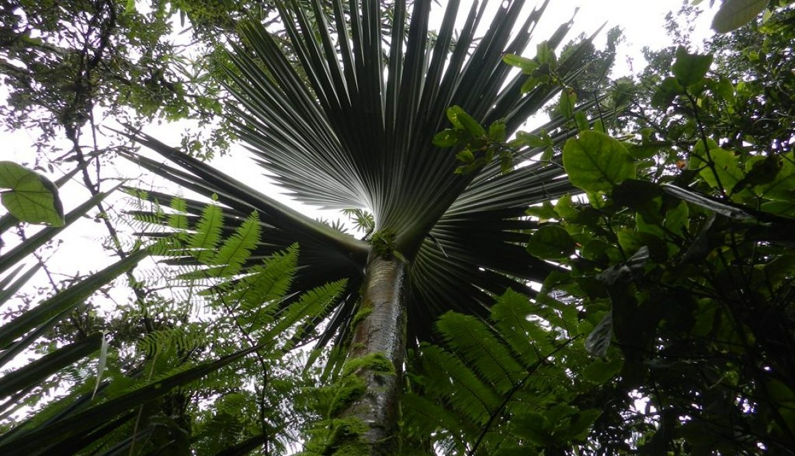 Liste des plantes rencontrés dans la localité de Maromizaha