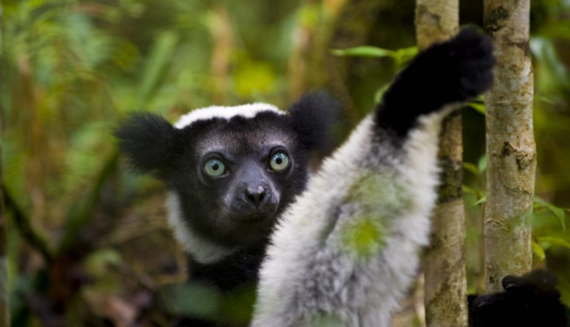 Last chance for Madagascar's biodiversity