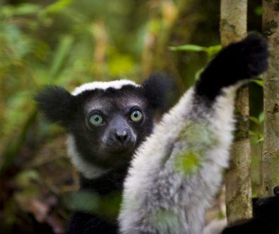 Last chance for Madagascar's biodiversity