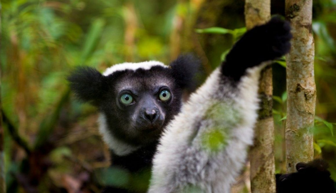 GERP-Saving Madagascar…