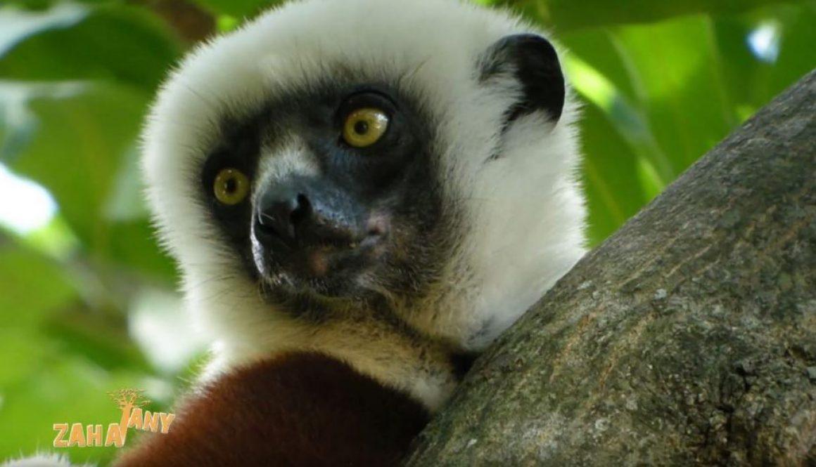 ZAHATANY |Forêt Maromizaha et le développement durable|