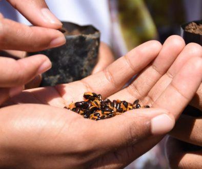 Ensemble, redorons le blason de Madagascar