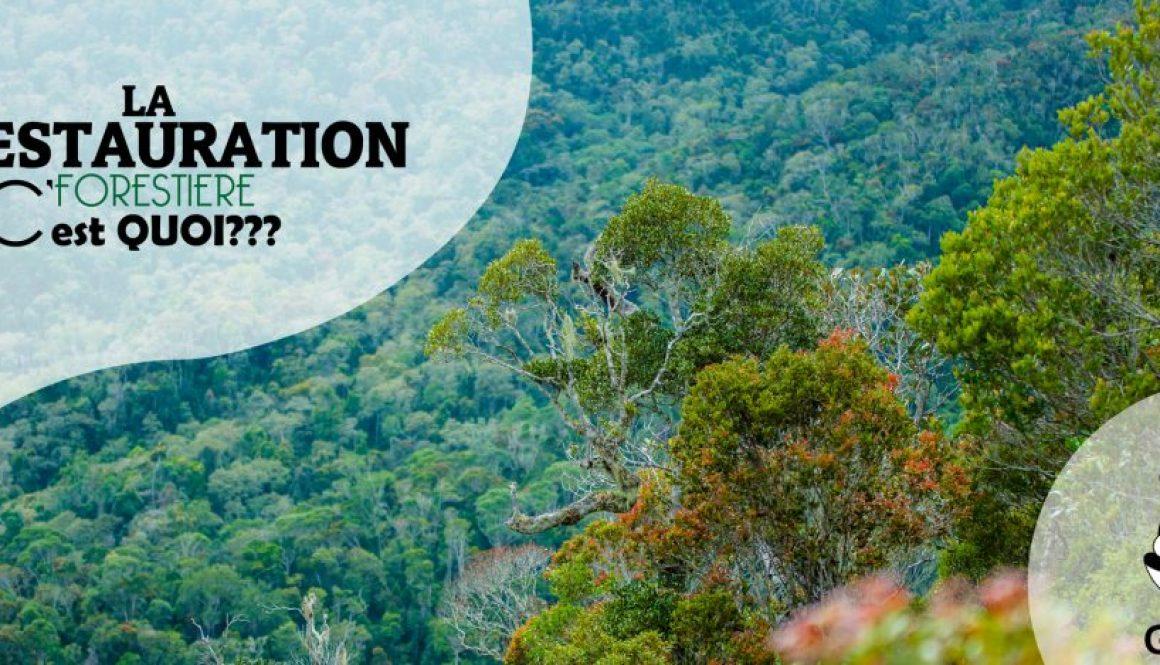 Qu'est ce que la Restauration forestière?